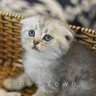 Opal Cat Town